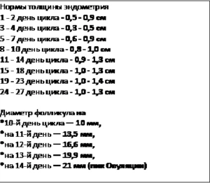 размеры эндометрия по дням цикла