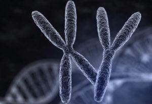 Сколько живут сперматозоиды