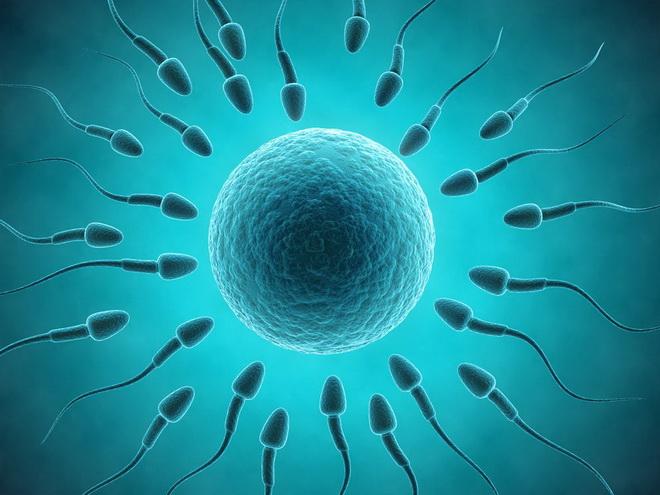 спермограмма по крюгеру