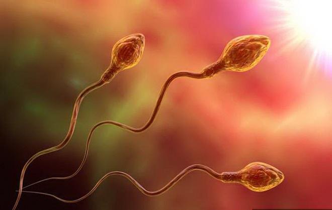 сколько живут сперматозоиды в матке